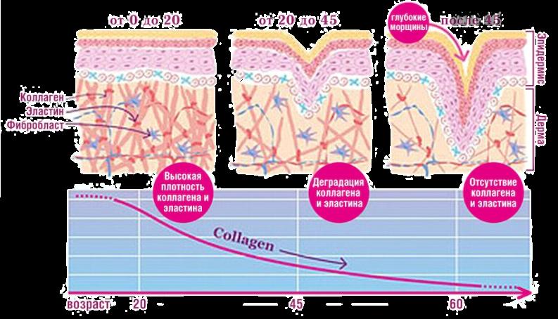 Коллаген для кожи: преимущества и недостатки
